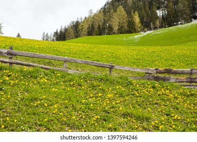 Beautiful mountain scenery in the Alps with fresh green meadows in bloom on a beautiful sunny day in springtime. Dolomiti montains in Italy. Landscape in spring in Europe.