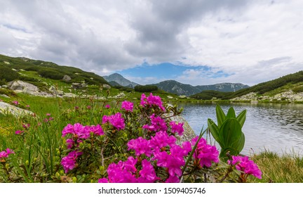 Beautiful mountain scenery in the Alps in summer