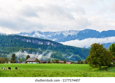 Beautiful mountain valley/field landscape with horses, trees and traditional austrian village in Austrian Alps. Austria, Salzkammergut.