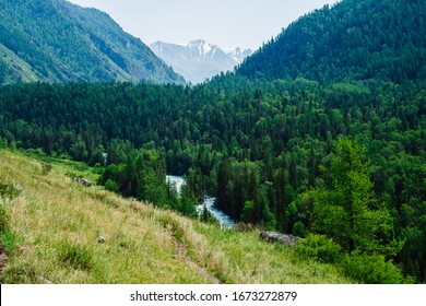 Beautiful mountain view to big glacier behind river valley with lush forest. Colorful green hills completely covered by coniferous forest. Scenic alpine landscape in sunny day. Vivid highland scenery.