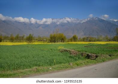 Beautiful mountains Landscape with Green feild Kashmir