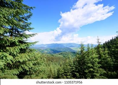 Beautiful mountains landscape with green  forest. Carpathians, Ukraine.
