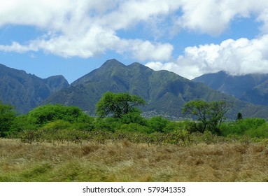 Beautiful Mountains and Trees in Maui Hawaii