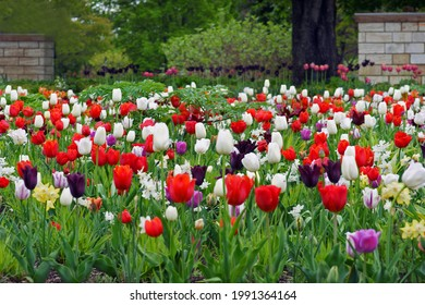 beautiful mulitcolor flower bed of tulips in the park