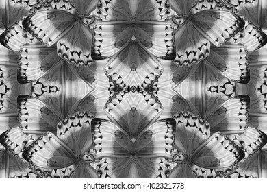 Beautiful multicolor pattern background texture made from Cambodian Junglequeen Butterfly (Stichophthalma howqua)