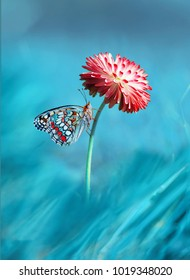 Beautiful multicolored colorful butterfly on bright pink magenta flower daisy macro on blue background in spring. Amazing unusual artistic image of the beauty of living nature
