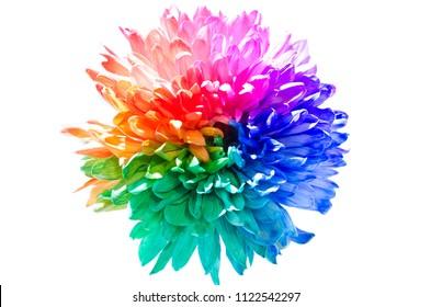 Single Flower Images, Stock Photos & Vectors | Shutterstock