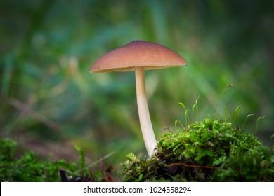 Beautiful mushroom in a moss
