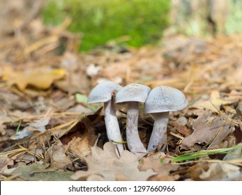 beautiful mushrooms growing on the forest edge