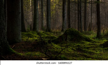 A beautiful mysterious green dark forest with some light falling from behind the trees