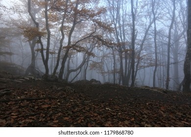 Beautiful mystic trees in a misty autumn forest