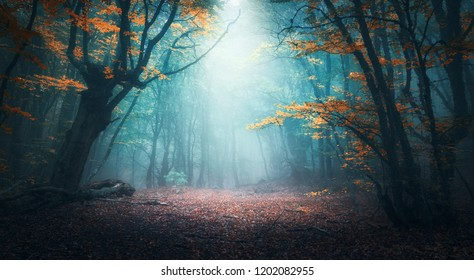Beautiful mystical forest in blue fog in autumn. Colorful landscape with enchanted trees with orange and red leaves. Scenery with path in dreamy foggy forest. Fall colors in october. Nature background