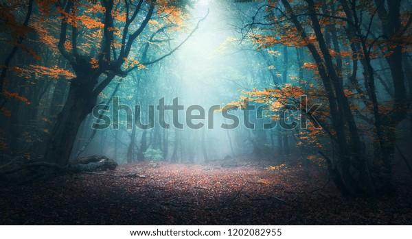 Красивый мистический лес в голубом тумане осенью. Красочный пейзаж с зачарованными деревьями с оранжевыми и красными листьями. Пейзаж с тропинкой в мечтательный туманный лес. Осенние цвета в октябре. Природа фон