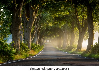 Beautiful narrow alley of old trees covered in morning mist during summer on Rügen island, Germany