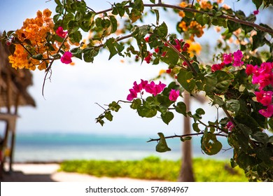 Bougainvillea art images stock photos vectors shutterstock beautiful natural arch on the way to the ocean of flowers in bougainvillea sciox Gallery