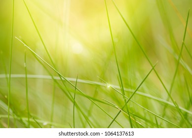 Beautiful natural background of green grass with dew and water drops. Spring.