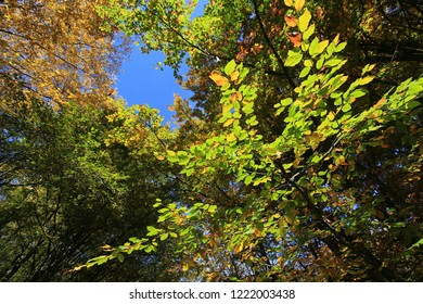 Beautiful natural background of green and yellow leaves and blue sky on a sunny day