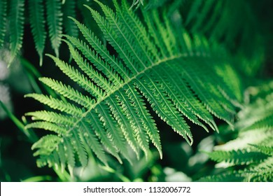 Beautiful natural background made with young green fern leaves