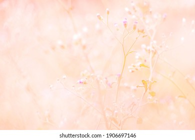 Beautiful natural background in pastel colors with a soft focus of blue shades. fresh wallpaper concept, among green leaves and other blossom blur background. - image
