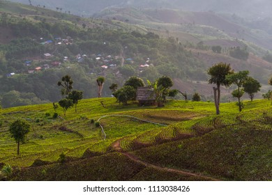 a beautiful natural beauty on mountain in Nan,Khun Nan  Rice Terraces, Boklua  Nan Province, Thailand
