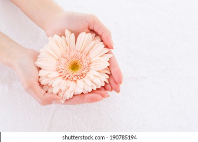 Beautiful and natural. Close-up of beautiful female hands holding flower