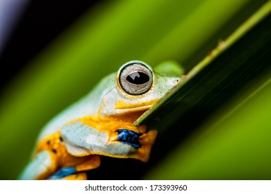 Beautiful natural concept with exotic frog