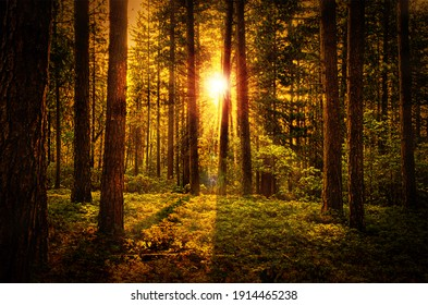Beautiful Natural Forest Dawn Background