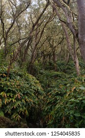 A beautiful natural forest in the highlands of the mountains of Reunion Island