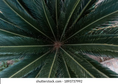 Beautiful natural green palm leaves, top view. Summer exotic bush.