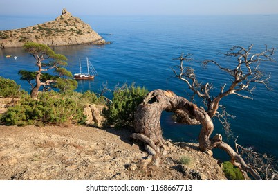 Beautiful natural landscape, pine and sea. Sunny summer day on the Crimean coast