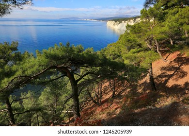 Beautiful natural landscape with pine trees against the background of the sea. Black Sea Coast in Russia, Krasnodar Territory