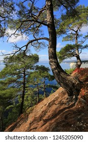 Beautiful natural landscape. Pines grow on the slope by the sea