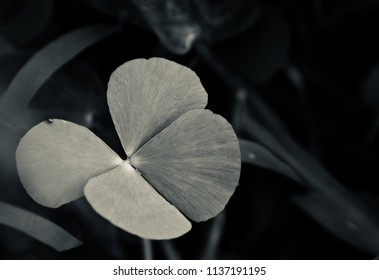 A beautiful natural leaf isolated object unique photograph