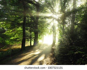 Beautiful natural light on a path in a forest, sunrise background