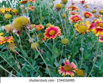 beautiful Natural nepali flowers in the garden