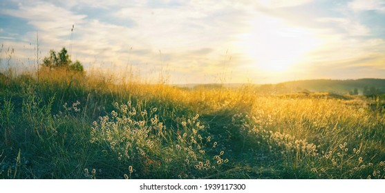 Beautiful natural panoramic countryside landscape. Blooming wild high grass in nature at sunset warm summer. Pastoral scenery. Selective focusing on foreground. - Shutterstock ID 1939117300