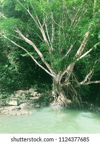 Beautiful Natural Scenery of River Tropical Green Forest Cruise