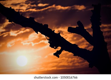 Beautiful natural sunset moments with a large black tree branch isolated unique photograph