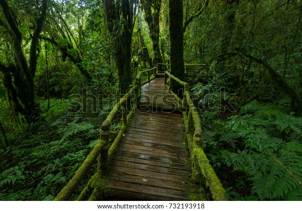 Beautiful Natural trails at rain forest, Ang ka nature trail
