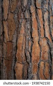 Schönes natürliches Baumrink-Muster. Nahaufnahme eines Baumes. Naturhintergrund