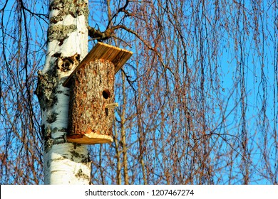 Beautiful natural wooden birdhouse on birch tree & blue sky background. Single birdhouse of birch wood log, sunny winter or spring day. Food birdhouse forest scene. Animal life care welcome home theme