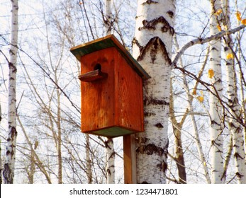 Beautiful natural wooden birdhouse on birch tree & sky background. Single birdhouse of birch wood log, sunny winter / autumn day. Brown food birdhouse forest scene. Animal life care welcome home theme