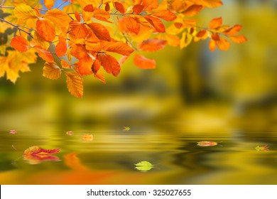 Beautiful nature autumn background with branch reflection in water