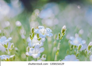 Beautiful nature background with fresh grass and gentle white flowers. Soft focus artistic lens close-up macro. Spring concept