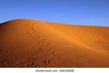 Beautiful nature background - great barchan with ripple sand and human foot prints at the background of bright blue sky, sunset time in iranian Maranjab desert near Kashan, Iran, Middle (Near) East