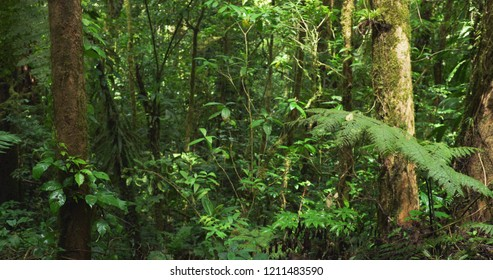 Beautiful nature background of lush green forest vegetation and sunlight