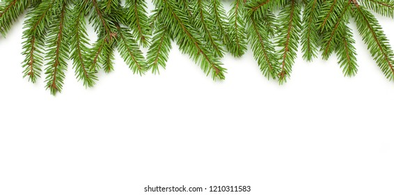 Beautiful Nature Background with natural fir tree. Spruce branches isolated on white background. Frame of green fir tree branches. Template for design. Wide angle Web banner or flyer with copy space