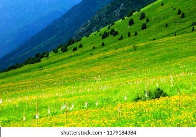 Beautiful nature background - scenic view of high mountain slope covered with green grass, yellow and white flowers in Tien Shan (Tian Shan) range, Ala Archa National Park, Kyrgyzstan, Central Asia