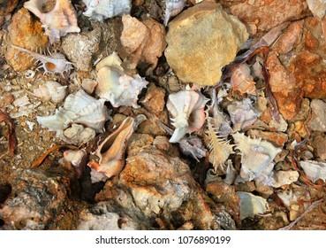 Beautiful nature background with seashells, stones and sand on the sea shore, Nainativu island, Sri Lanka, South Asia
