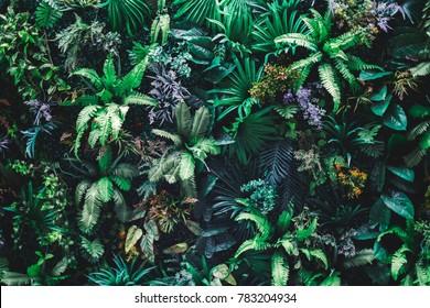 Schöner Naturhintergrund mit vertikalem Garten mit tropischem grünem Blatt